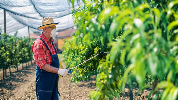 Gyorssegély a legyengült növényeknek: a lombtrágyázás tökéletes segítség lehet