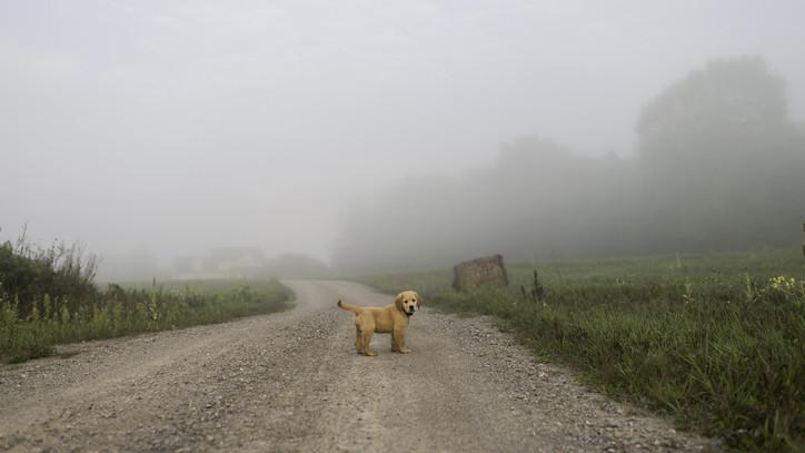 Emberségből jeles: megmentették egy kutya életét a nagykátai egyenruhások