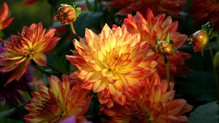 Ezek a legnépszerűbb virágok mindenszentek ünnepén: mutatjuk, mennyibe kerülnek idén