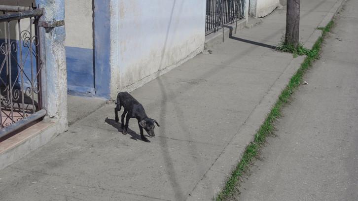 Problémát jelentenek a kóbor ebek: így lépnek fel ellenük Heves megyében