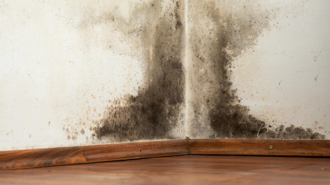 Elszaporodott a penész a lakásban? Könnyen lehet, hogy a teregetés az oka