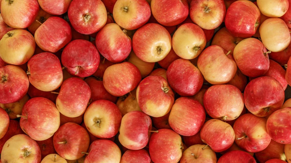 Hány kalória egy alma? Mutatjuk, mennyi az alma kalória tartalma, 1 alma hány kalória
