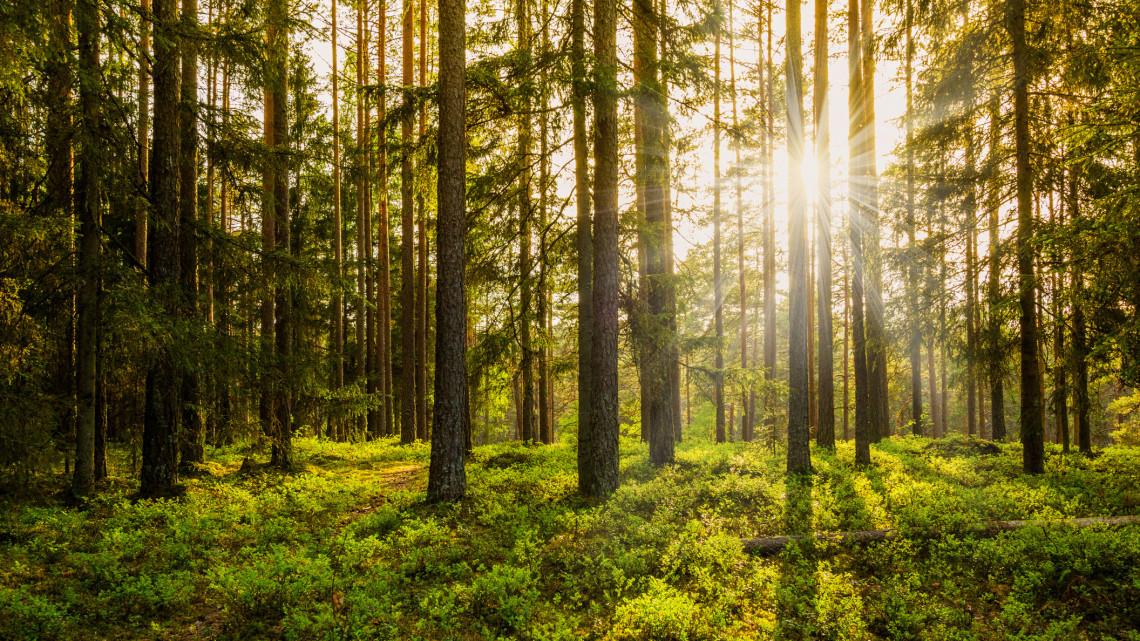 Meseszép környezetben zajlik majd a kutatás: Galgamácsa mellett nyílik újabb magyar erdőrezervátum