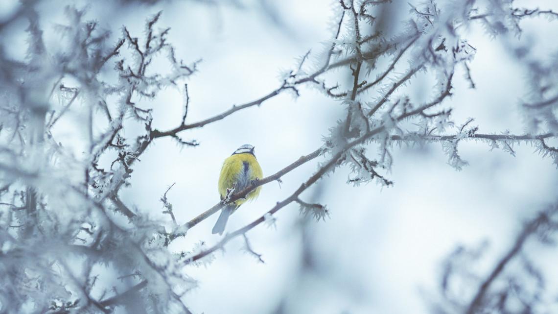 Videón, ahogy szakad a hó Kékestetőn: máris nyakunkon a tél?