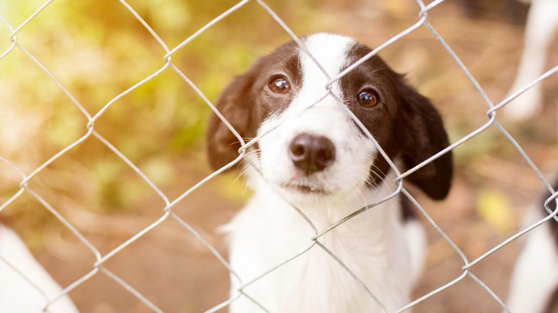 Koronavírus: nem ad ki egyetlen kutyát sem az állatmenhely, míg tart a járványhelyzet