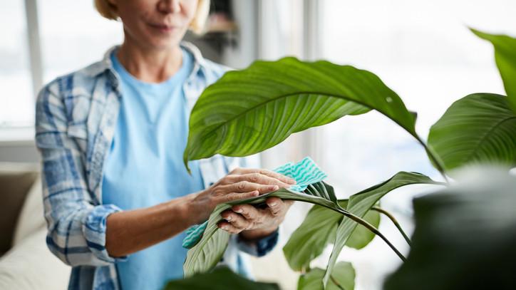 Erről a legtöbb hobbikertésznek fogalma sincs: íme 4+1 tipp a tökéletes növényápoláshoz