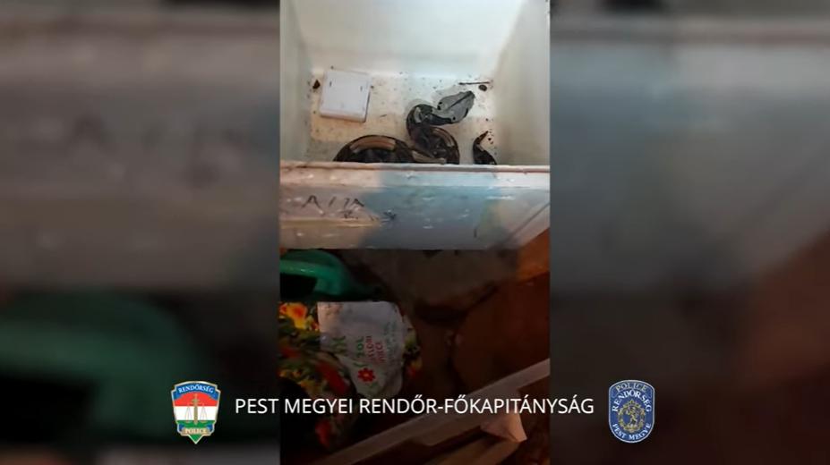 Erre nem számítottak a rendőrök: veszélyes egzotikus állatokat találtak egy családi házban