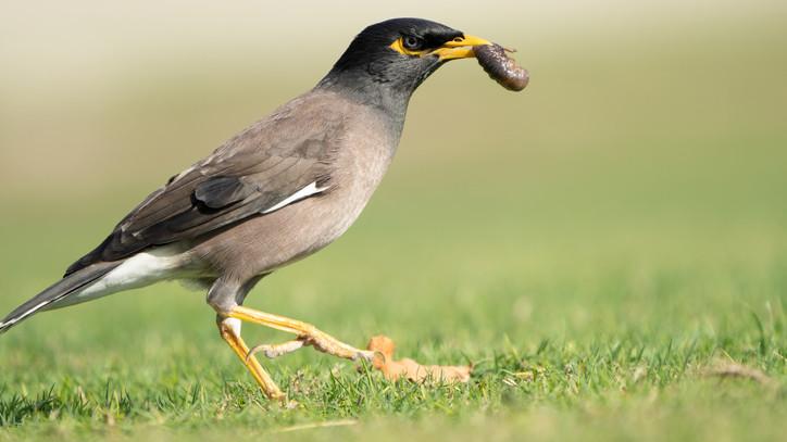 Itt a lista: összeírták, melyek a legpusztítóbb invazív fajok Európában