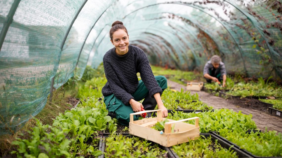 Ezért érdemes földet bérelni: mutatjuk, hogyan juthatsz vegyszermentes, szezonális javakhoz