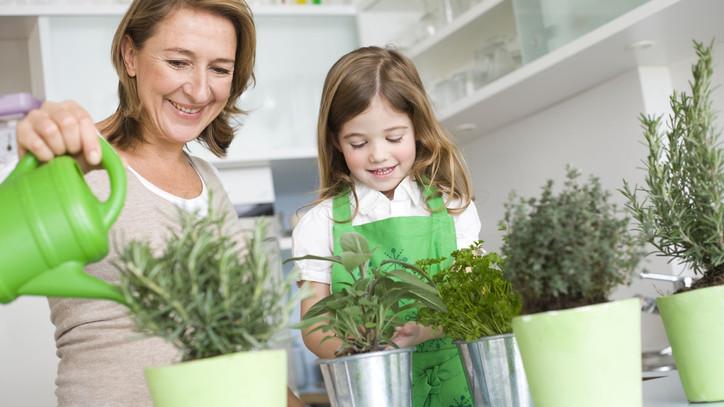 Télen se mondj le a friss zöldségekről: ezek a lakásban is simán megteremnek