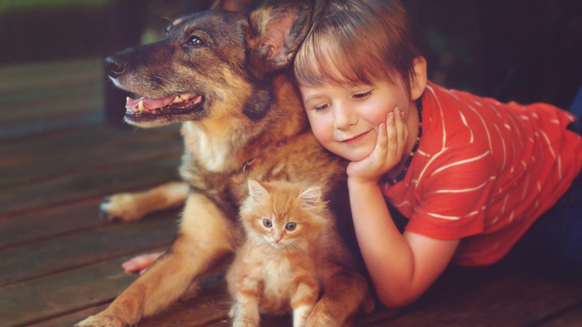 Téli depresszió, koronastressz: vajon a kutyák vagy a macskák enyhítik jobban a szorongást?