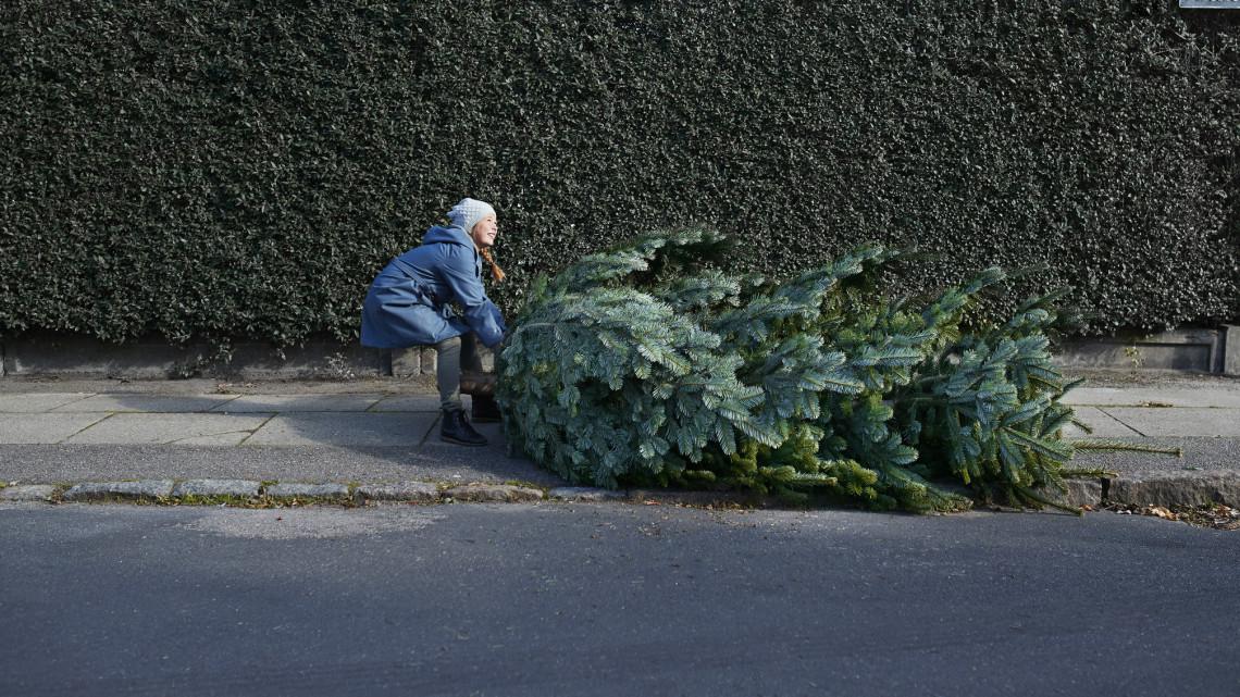 Karácsonyfa árak 2020: ennyibe kerül idén a lucfenyő, ezüstfenyő, nordmann fenyő