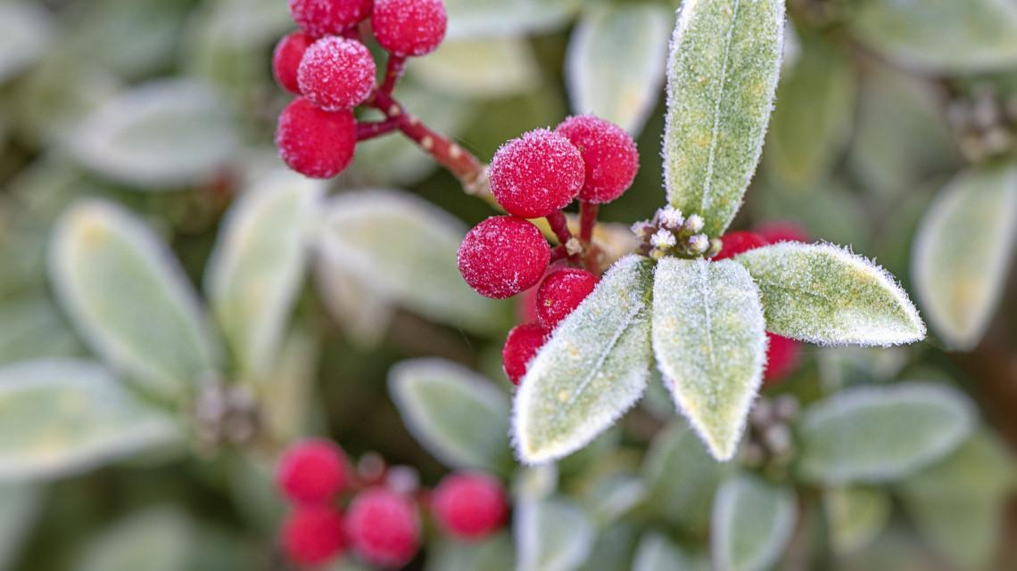 Ezek a legfontosabb kerti munkák télen: itt a 7 pontos feladatlista