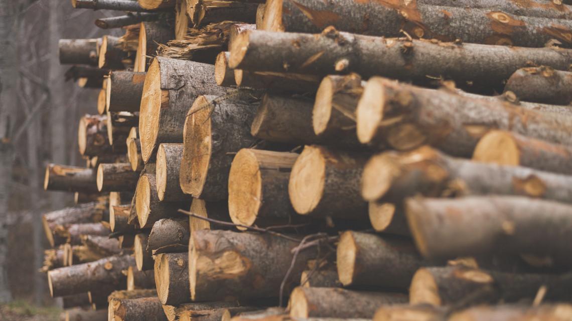 Lecsapott a Nébih: csaknem 1400 köbméter tűzifát koboztak el két kereskedőtől