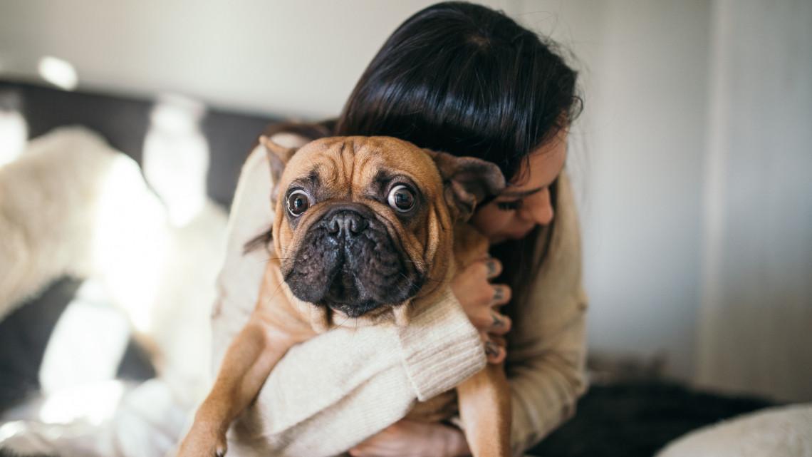 A kutya sem fizette: ebben a vidéki városban biztosan nem lesz ebadó