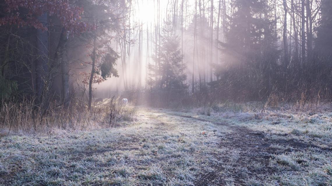 Kirándulók, figyelem: vadászat miatt látogatási tilalom lépett érvénybe a Zselici erdőben