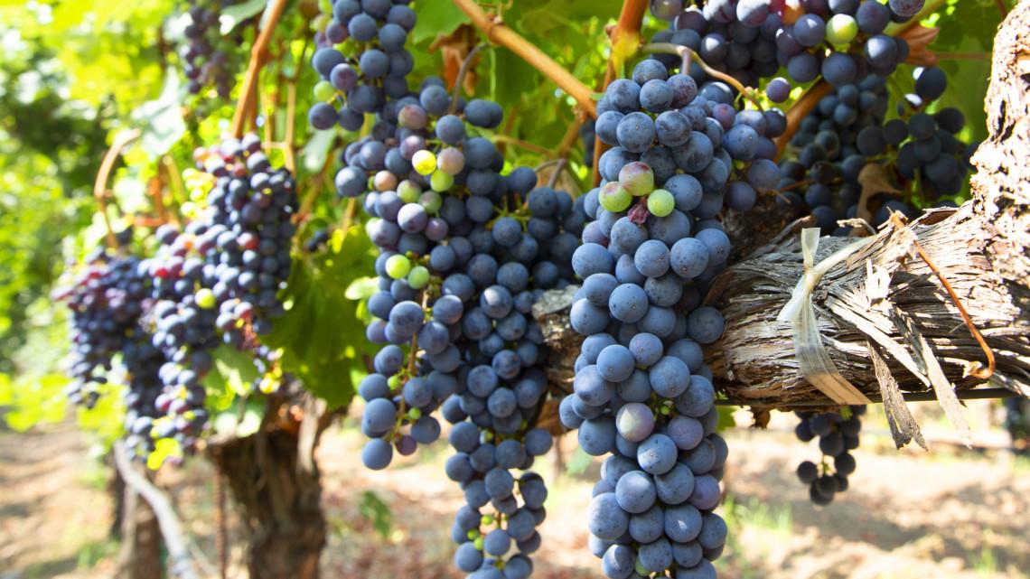 Elfogadta a parlament az új bortörvényt: mutatjuk, mi minden változik jövőre