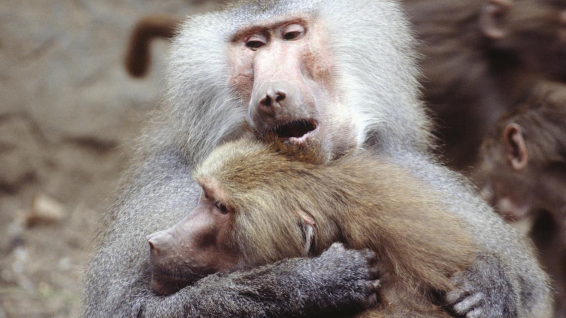500 milliós kiesés a Nyíregyházi Állatparkban: mi lesz így az 5 ezer állat sorsa?