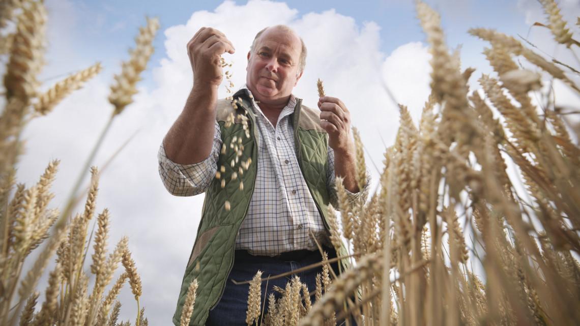 Durván elszállt a búza és más termények ára: óriási volt a drágulás 2020-ban