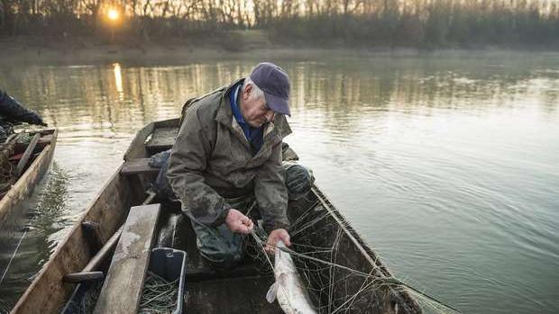 Eldőlt az újévre: a három őshonos magyar halunk közül ez lett az Év hala