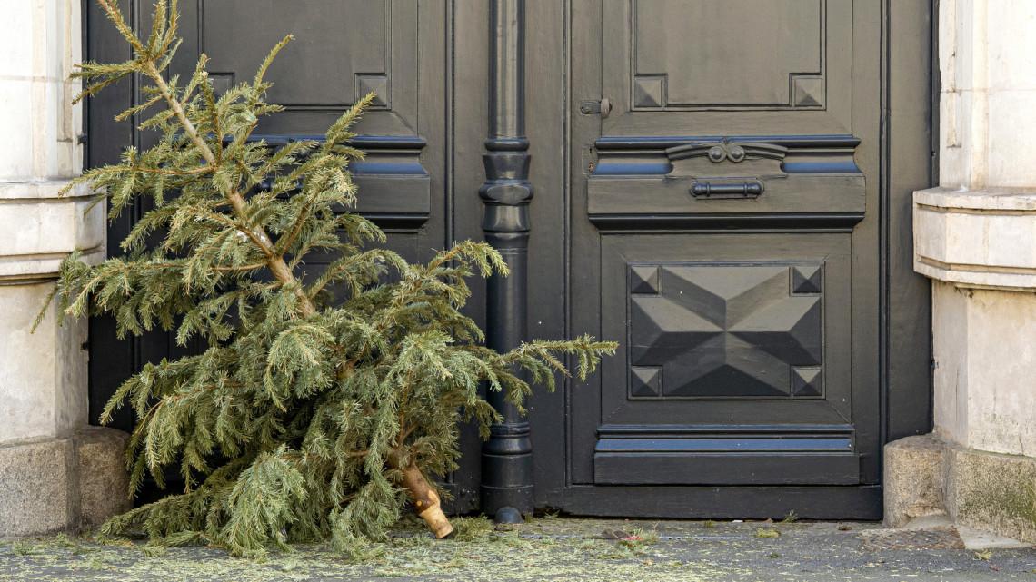 Ezért ne hajítsd csak úgy ki: a karácsonyfákból örökzöld energia is lehet