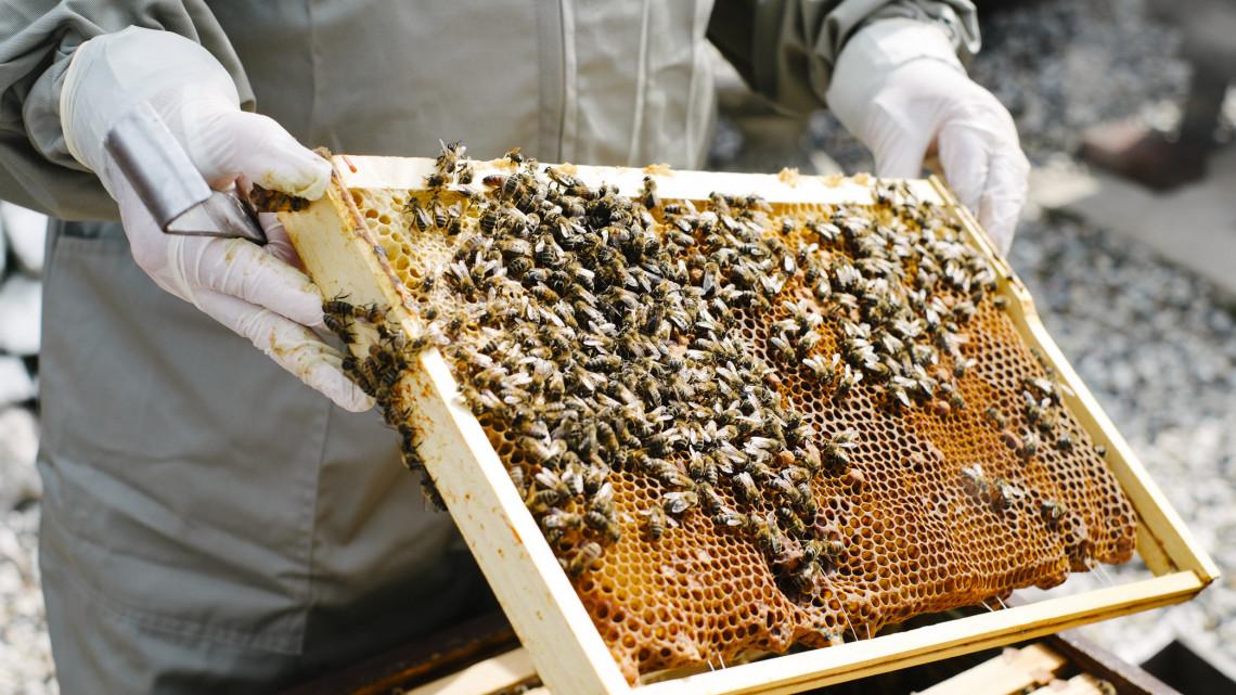 Mit nekik a pocsék szezon: egyenesen tarol ez a családi méhészet, mi lehet a titkuk?