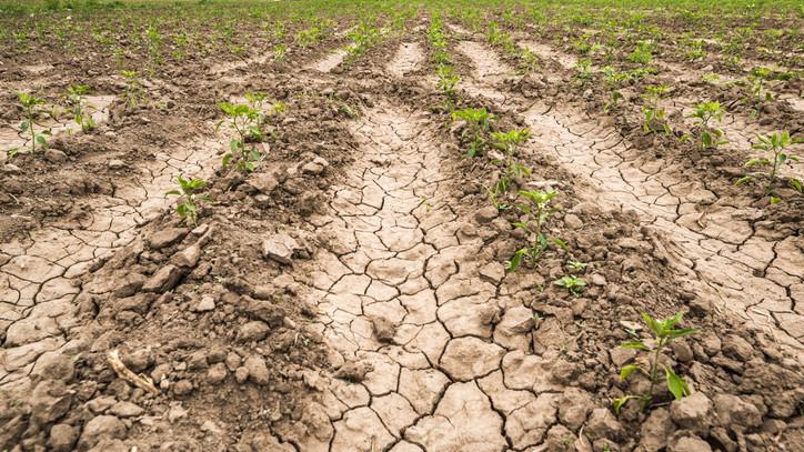 Ez lehet a megoldás a pusztító szárazságra: borzalmas károkat okoz a klímaváltozás