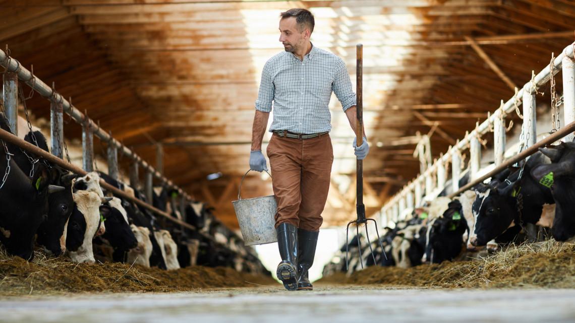 Nehéz év vár az állattenyésztőkre, de a gazdák bizakodnak: ezen múlhat 2021 sikeressége