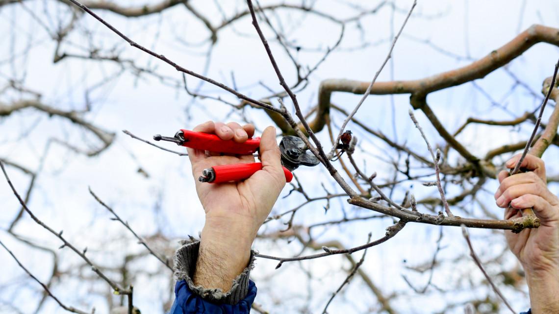 Ezek a legfontosabb kerti munkák februárban: itt a 7 pontos feladatlista
