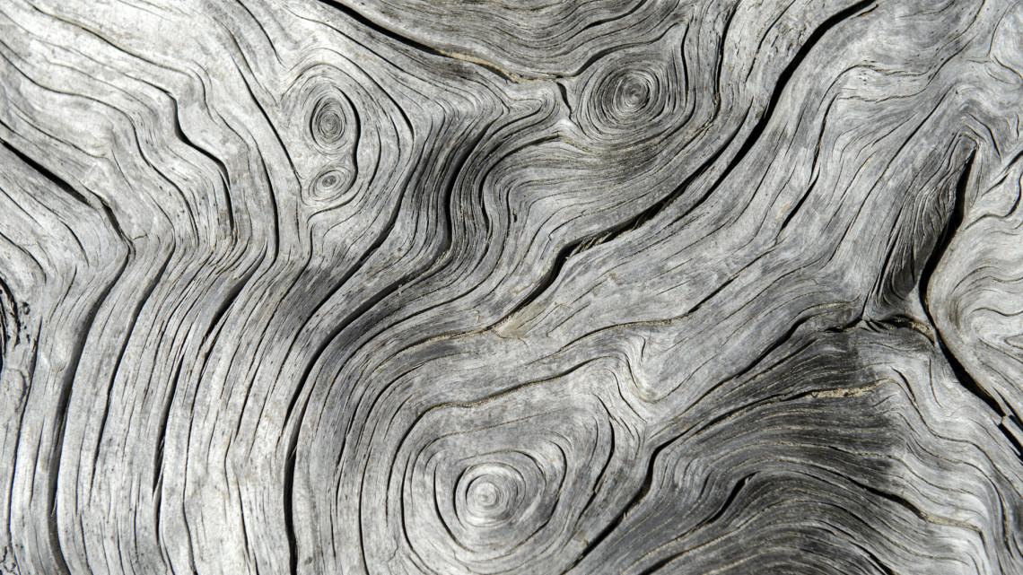 Szenzációs: több ezer éves faévgyűrűket vizsgáltak vidéki kutatók