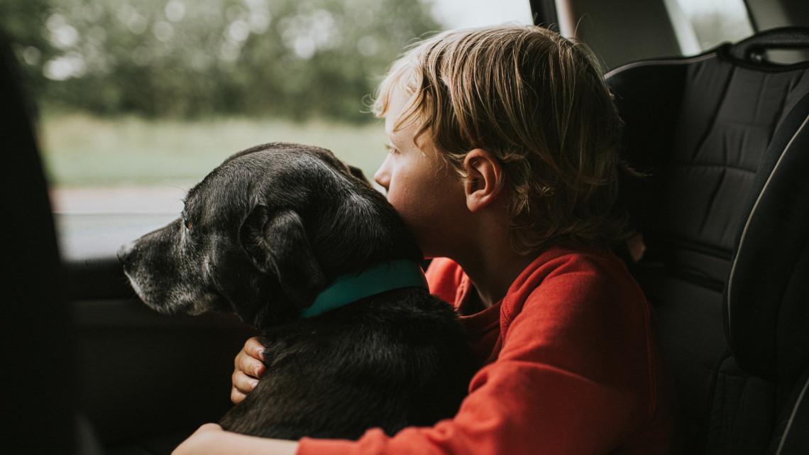 Kutyát fogadnál örökbe? Ezekre érdemes leginkább odafigyelni