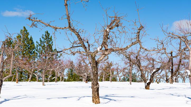 Még nem késő a fagy ellen védekezni: így élhetik túl növényeid a telet