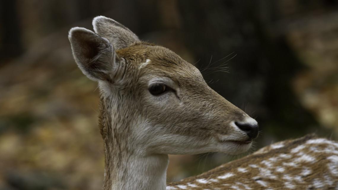 Vasárnapi szívmelengető: ez a Bambi csúnyán pórul járhatott volna, de
