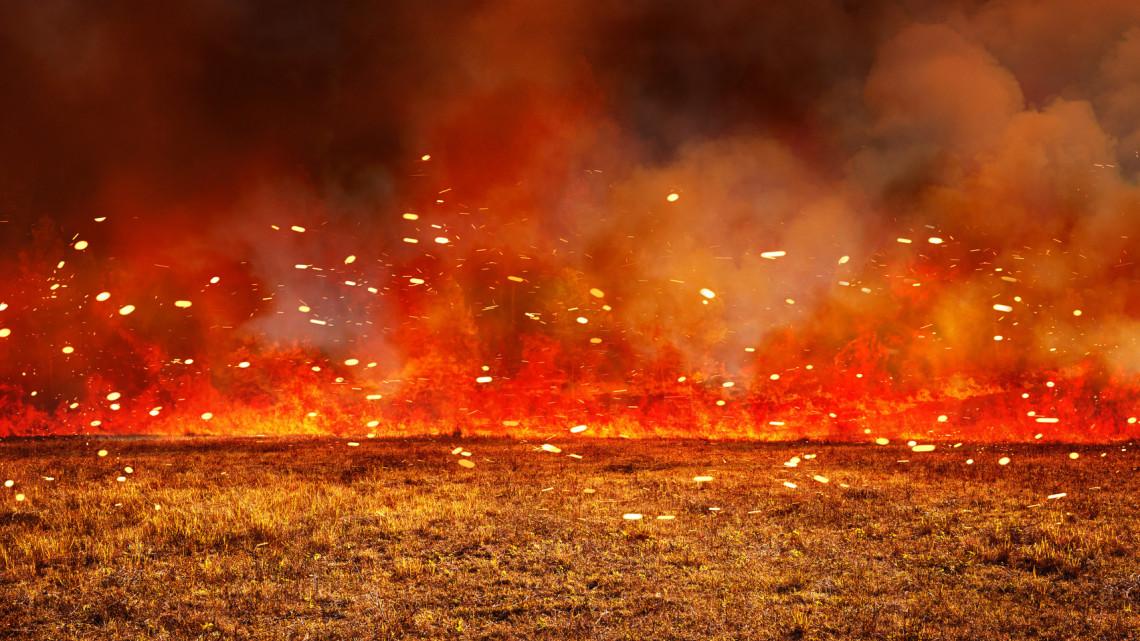 Borzalmas pusztítás: hatalmas területen égett le a balatoni nádas