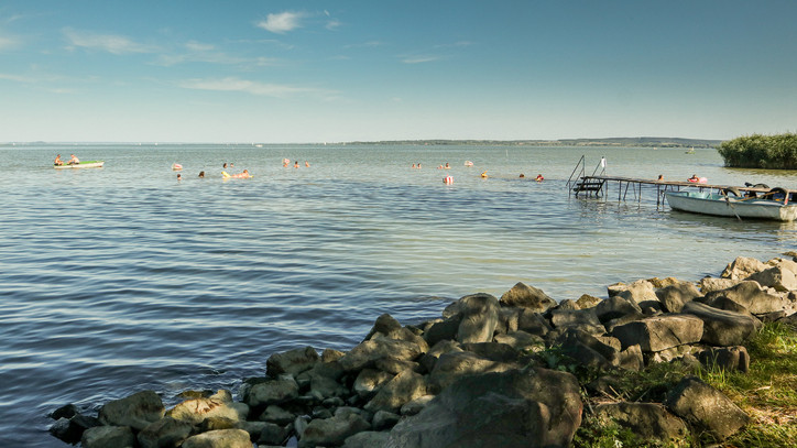 Ezek az inváziós fajok uralják a Balatont: többé nem lehet tőlük megszabadítani a tavat