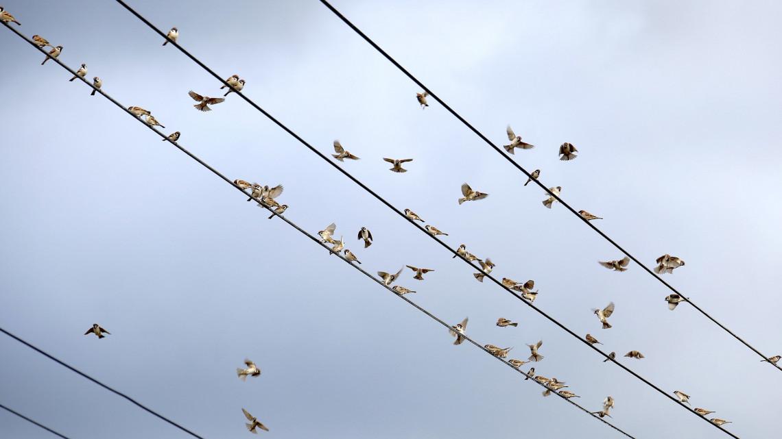 Magyar fejlesztés: így védik a madarakat az áramvezetékektől