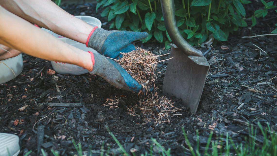 Ezt a talajvédő trükköt mindenképp próbáld ki a kertben: rengeteget spórolhatsz vele