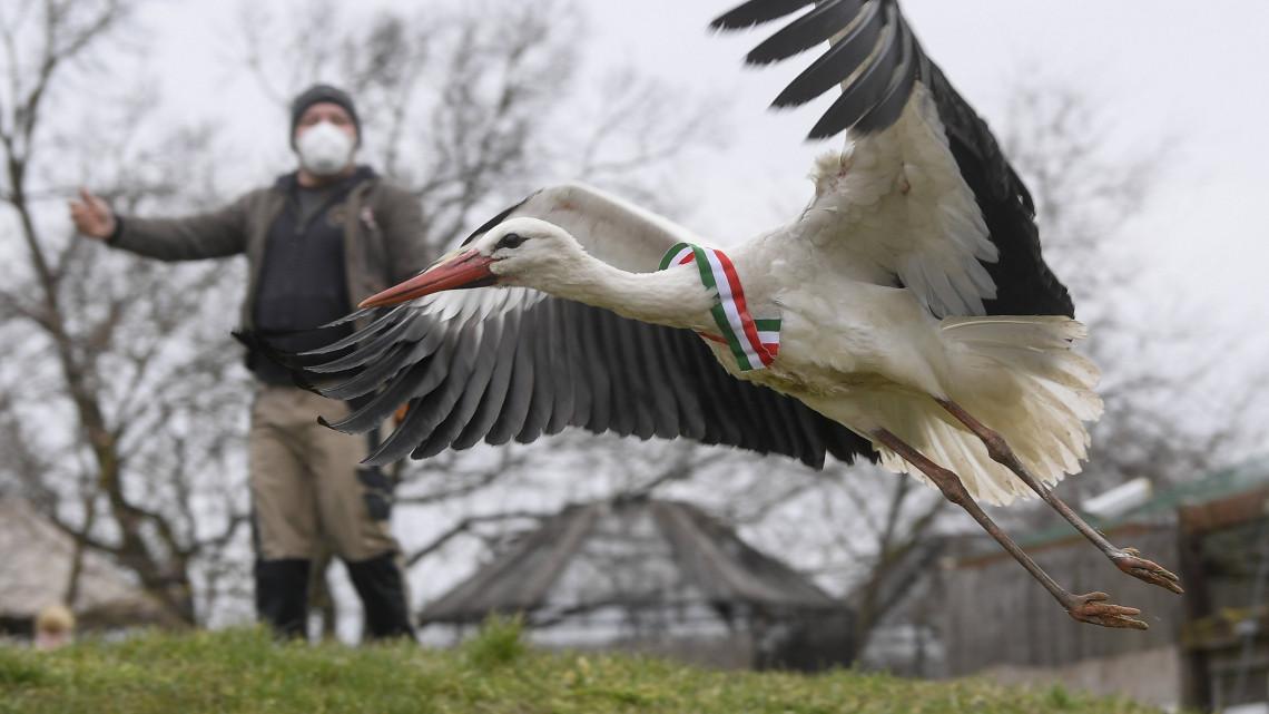 Fantasztikus pillanat: meggyógyított gólyákat engedtek szabadon a Hortobágyon
