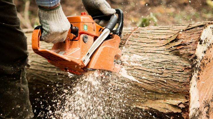 Tél végéig meg sem áll a munka: bontóvágások kezdődtek a somogyi erdőkben