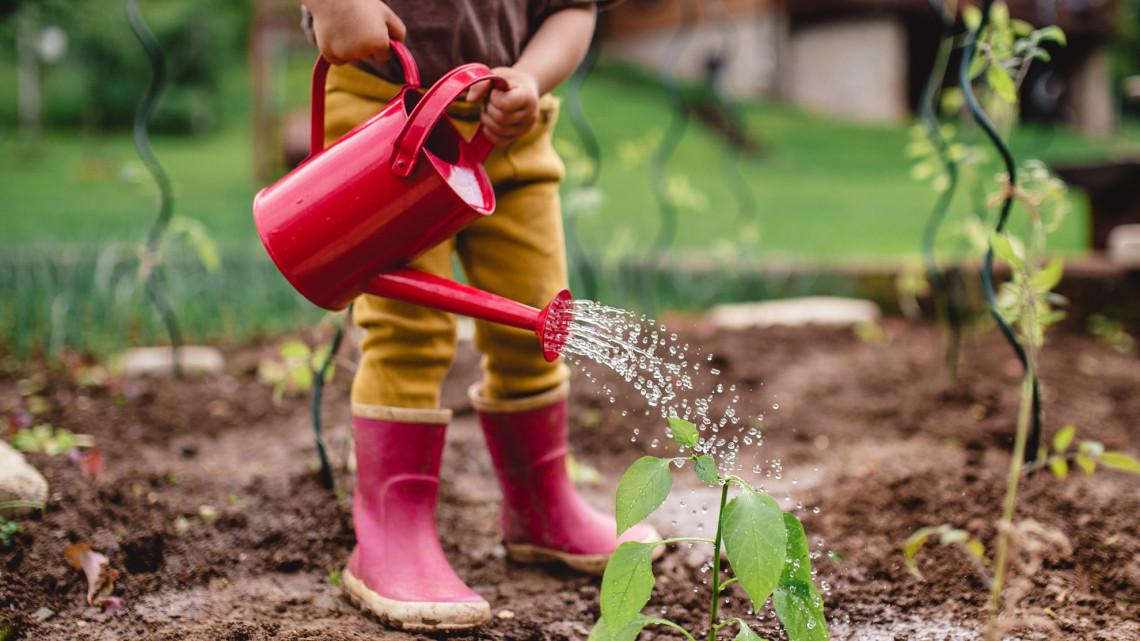 12 merénylet, amit ne kövess el a kerted ellen: kidobott pénz és idő, ha erre nem figyelsz