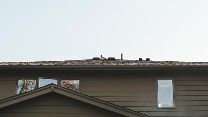 Váratlan vendégek az erkélyen, tetőn: így segíthetsz te is a bajba került récéken