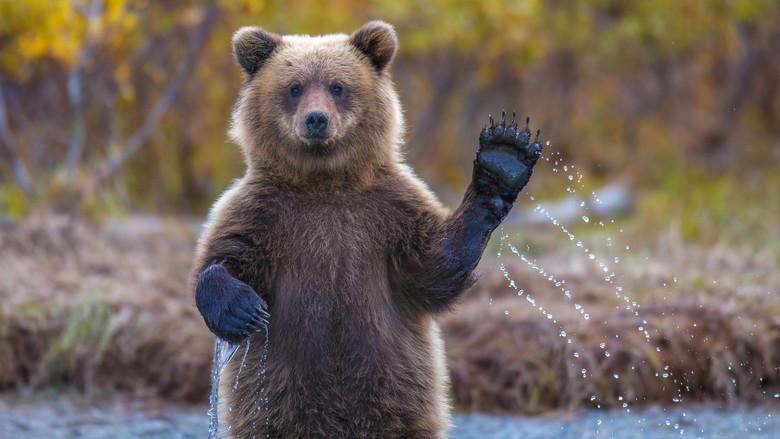Váratlan vendég: hatalmas medve pancsolt a jaccuziban egy magánház teraszán+videó