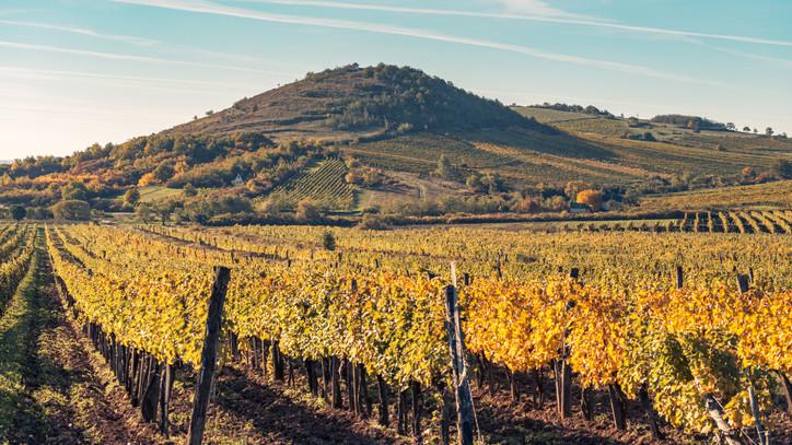 Ismét a magyar borokra figyel a világ: itt mutatkoznak be a legjelentősebb magyarországi borvidékek