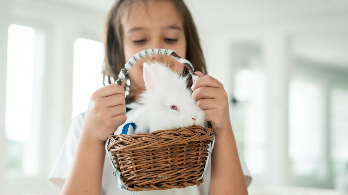 Élő nyuszit húsvétra? Nem biztos, hogy jó ötlet, könnyen drága mulatság lehet
