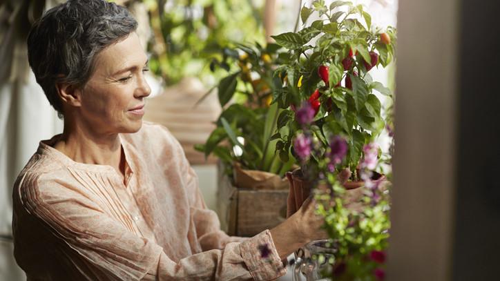 Érdemes befektetni egy hobbikertbe: rengeteget spórolhatsz a saját zöldségekkel