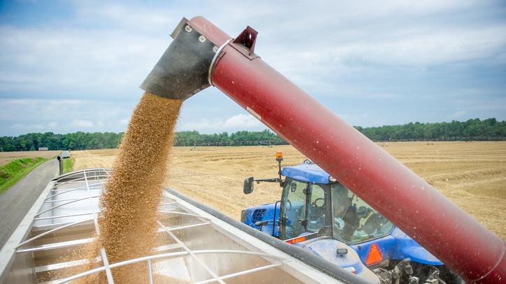 A magyar agrárexport fontos terméke a takarmány: elképesztő bevételforrást jelent