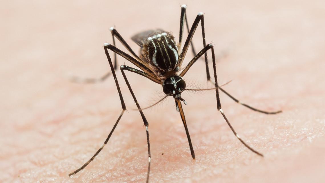 Ez a 3 szúnyogfaj hihetetlen veszélyes: állandó járványügyi fenyegetést okozhatnak