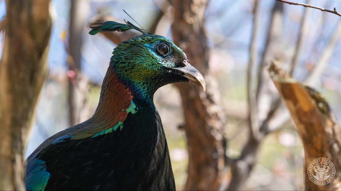 Micsoda kuriózumok: színpompás távol-keleti szárnyasok érkeztek a vidéki állatkertbe