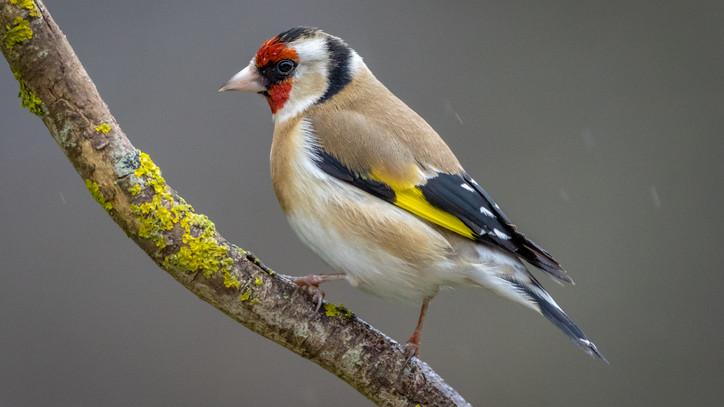 Védett madarakat fogott be: büntetőeljárás indult a salgótarjáni férfi ellen