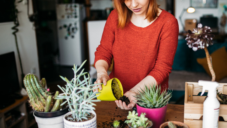 Ezek a legnépszerűbb szobanövények itthon: mutatjuk, hogyan gondozd őket